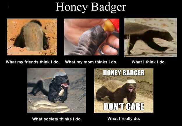 """Honey Badgers 