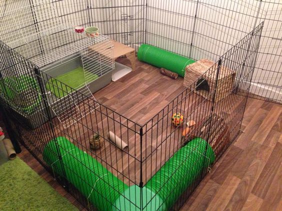 ♥ Pet Rabbit Ideas ♥   Check out our indoor rabbit hutch. When these bunnies are not sprinting about the house, they sleep here.: