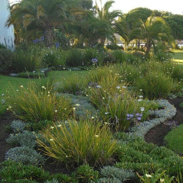 South African Garden African Plants Garden Ideas South Africa