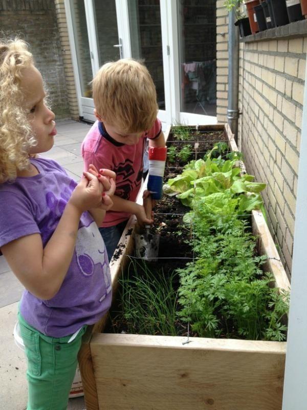 Maak bakken om kleine groentjes in te telen op werkhoogte voor je kids. Zo kunnen ze elke dag zelf een kijkje nemen en de veranderingen waarnemen.