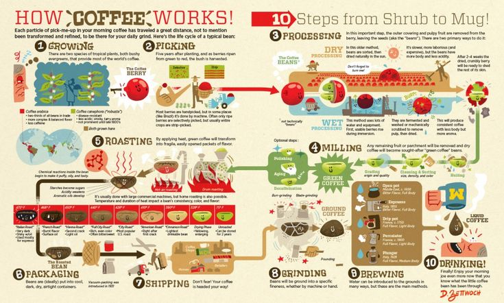 Coffee Infographic from growing the shrub to the final coffee cup. #coffee, #coffeebean, #coffeeplant, #coffeegrowing, #coffeeprocess, #infographic, #infographics