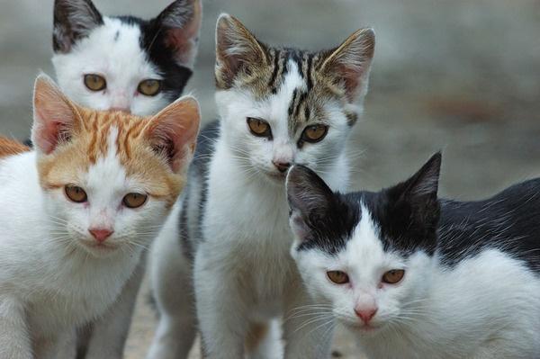 """Animali più tutelati: a Pogliano nuove norme anche per colonie e """"gattare"""""""