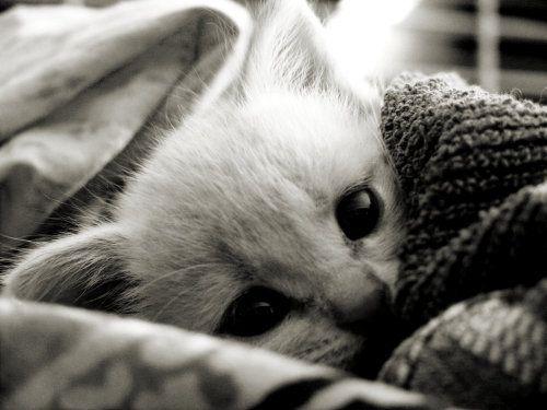 adorable cuddling kitten! (too cute) ♥