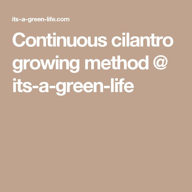 Continuous cilantro growing method @ its-a-green-life