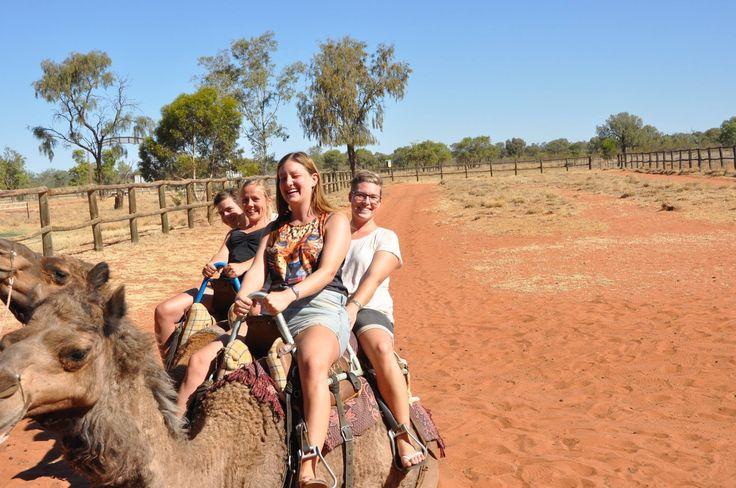 Australien. Australia. Nature. Travling. Travel. Memories. Adventuredk. Camel. animals