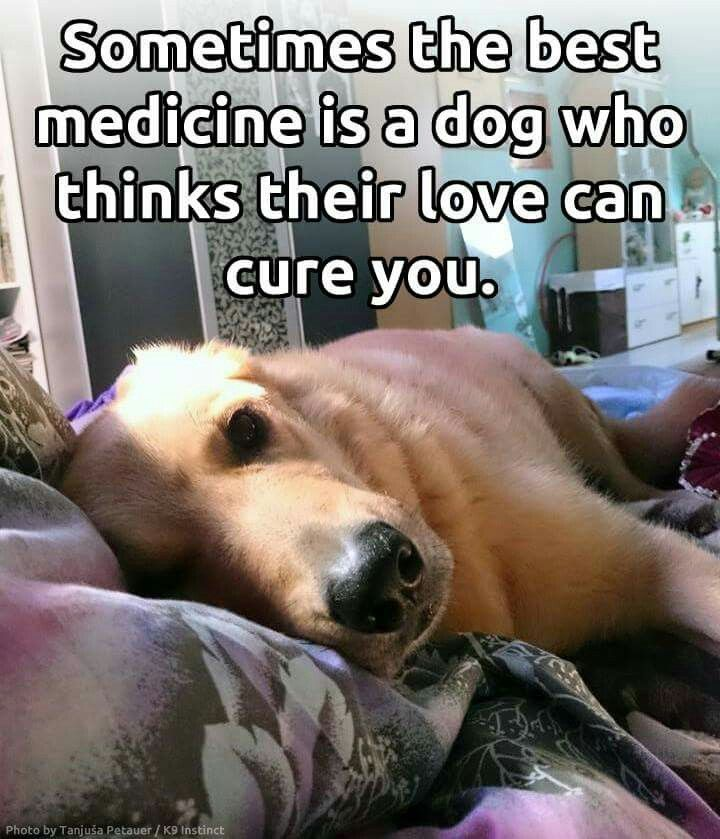 best medicine is a dog who thinks their love can cure you