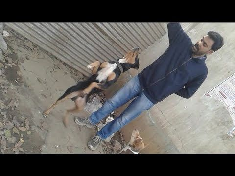 My Doggy Dancing Two Cut Doggy Like Biscuit Dogs Play With Me My