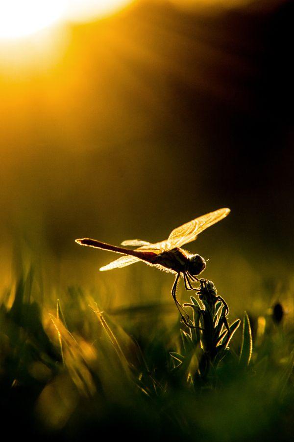 Aniseptora at dawn by Altan Biket - Photo 128118037 - 500px