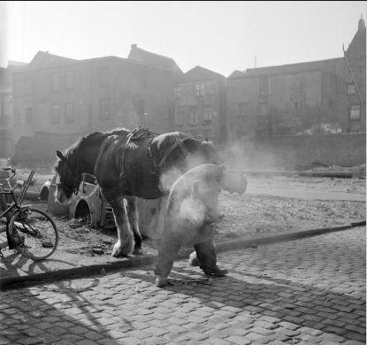 Hoefsmid de Valk, 1956 Datering: 1956 Locaties: Oude Haven Nijmegen ran