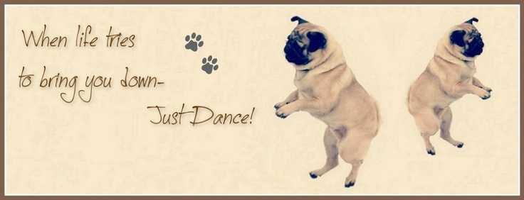 Pug Dog Pictures Funny