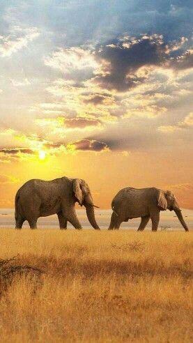 4. Go on a safari, South-Africa