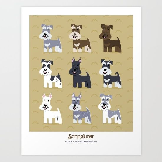 Schnauzers of different colors