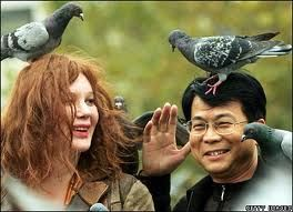 Why pigeons deserve to die: they have no respect for mankind!