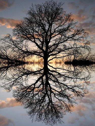 reflections - Click image to find more Outdoors Pinterest pins