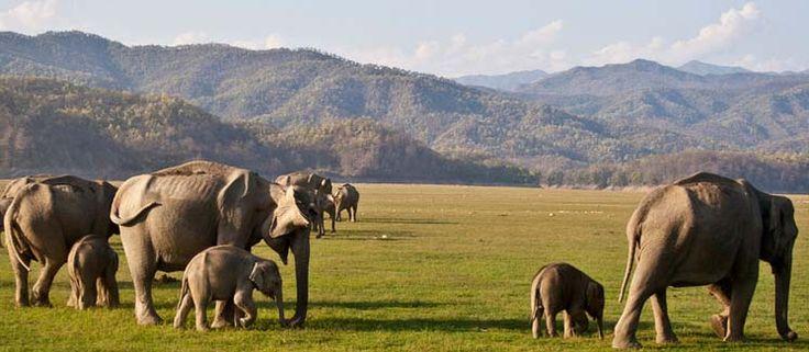Safari Booking & Tariff Jim Corbett National Park, India
