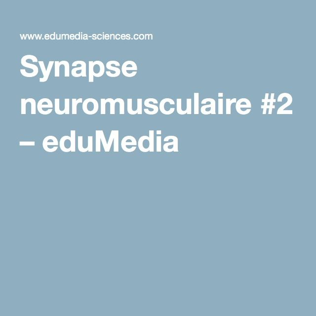 Synapse neuromusculaire #2 – eduMedia