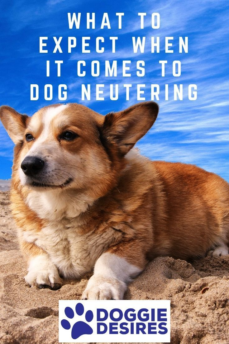 What To Expect When It Comes To Dog Neutering Dog Walking Dog