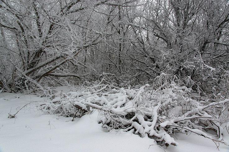 winter etude by Victor Yastrebov on 500px