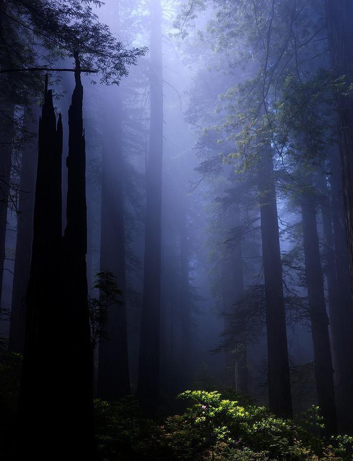 Enchanted Place.    Redwood National Park - Bench (Ben Hattenbach)