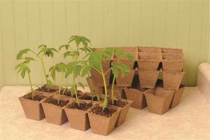 Natural Peat Pots: start your seeds, then tear off each pot and plant the whole thing in the ground. Easy way to transfer seedlings!