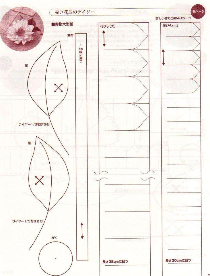 хризантема 40