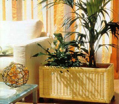 123 Best House Plants Images On Pinterest Succulents