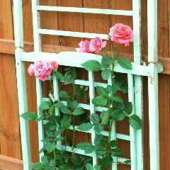 Did you know you can be fined if you try to sell your old, drop-side crib? Since they've all been recalled, what to do with it? How about this... garden trellis