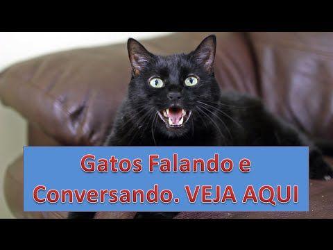 Gatos Falando e Conversando [Miando Engraçado]