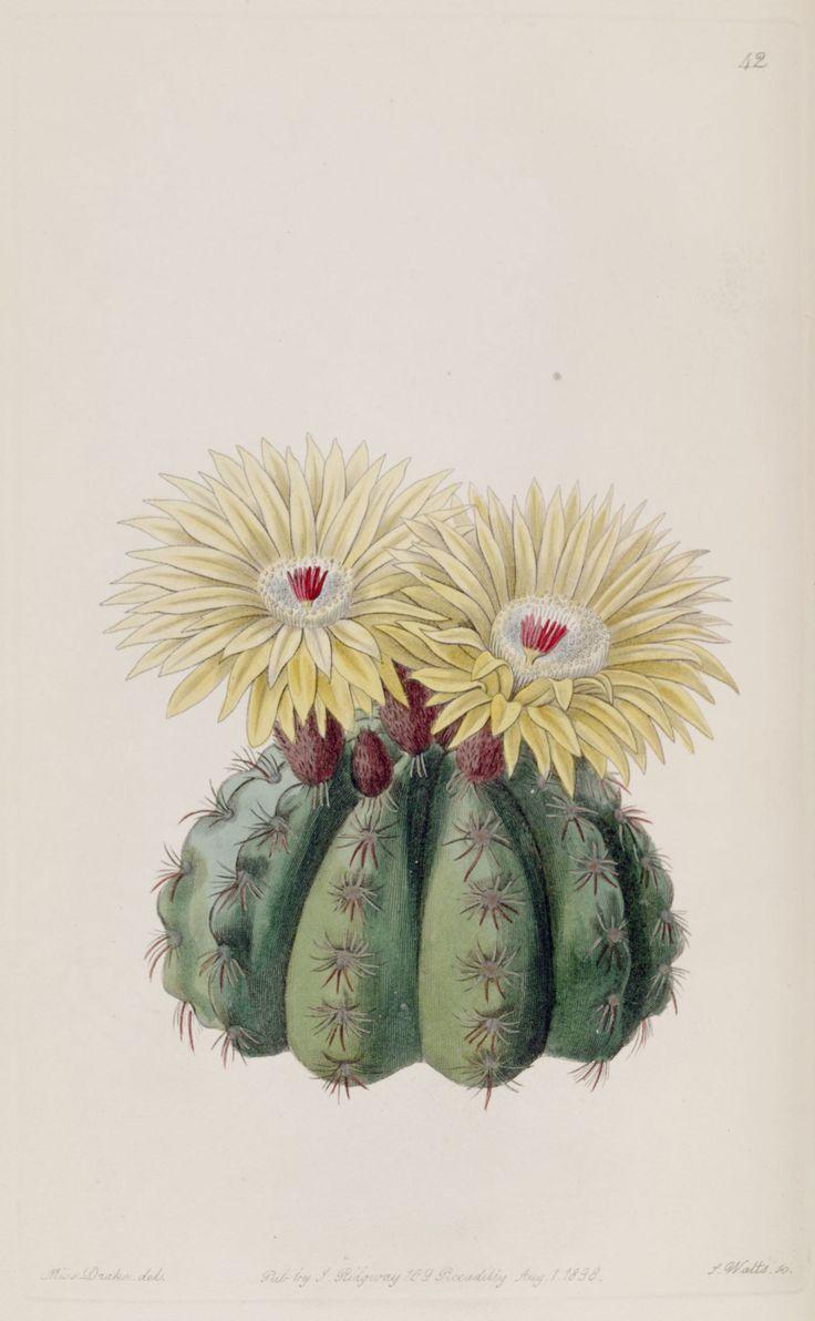 """Résultats de la recherche - """"cactus"""" - Dessins fleurs de jardins 127…"""