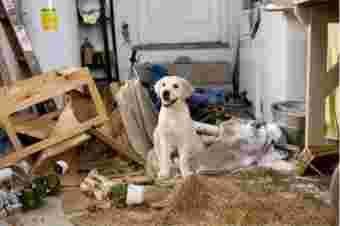 chien qui a détruit des meubles
