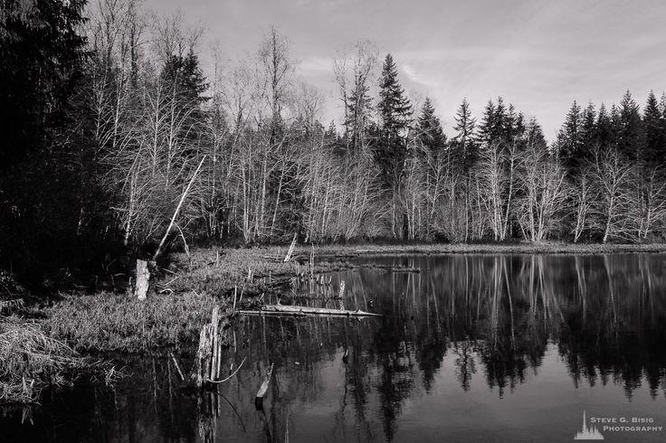 Shoreline, Lake West, Mason County, Washington, 2017 | #photography #art #prints #wallart