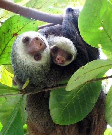 Volunteering With Animals in Central America