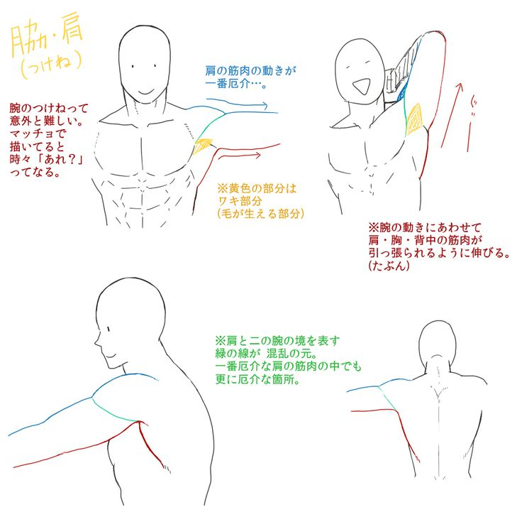 なんちゃって筋肉の描き方【自分用】 [10]