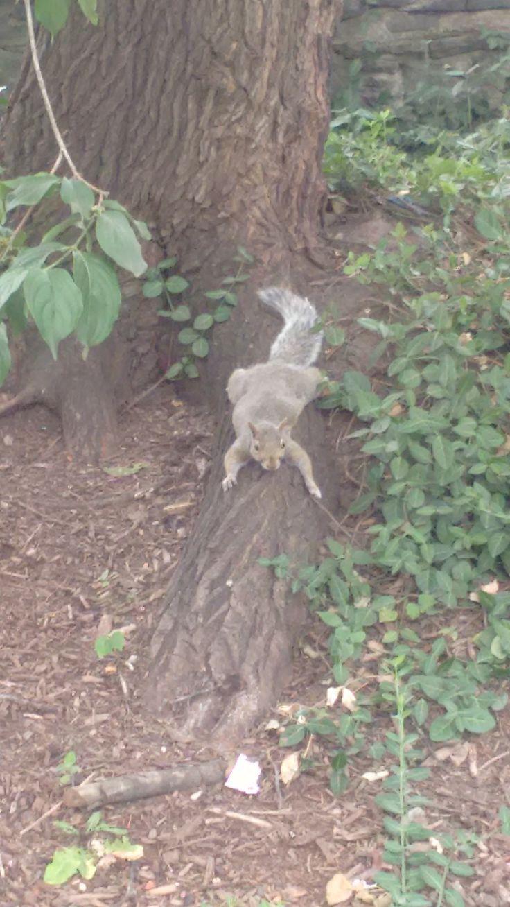 Chipmuk rest in Central Park