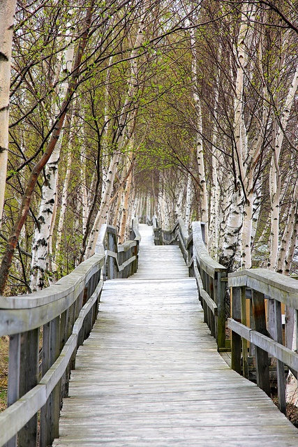 Journey's Beginning: Sackville Marsh Boardwalk, Sackville, New Brunswick, CA