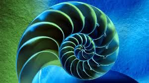 Image result for fractal geometry of nature