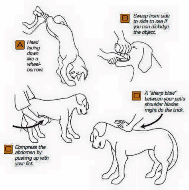 Choking dog