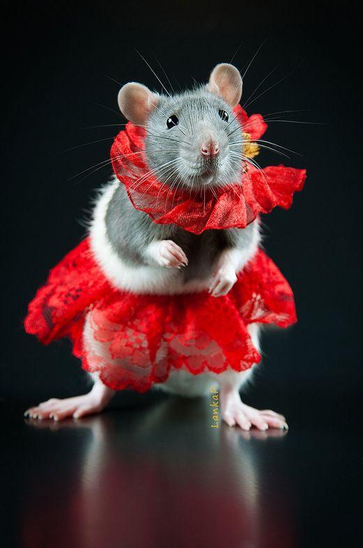 Картинки мышек и крысок на новый год
