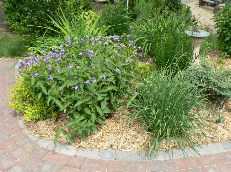 Mulch Is A Permanent Layer Of Organic Matter, Laid On The Soil Surface To  Conserve