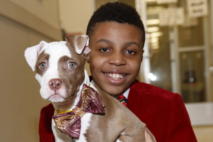 This kid makes shelter puppies look fabulous | New York Post