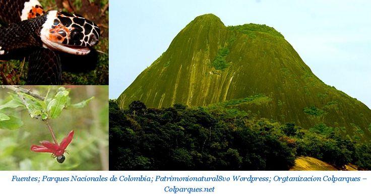 """La Reserva Natural Puinawai, en lengua puinave """"Madre de la Humanidad"""", es un gran territorio lleno de maravillosas selvas y sabanas amazónicas donde afloran largos espinazos de montañas aisladas y oscuras colinas de granito.  http://melanimsas.blogspot.com.co/2017/05/rnn-puinawai-maravilla-colombiana.html"""