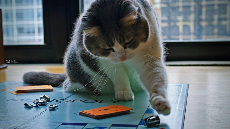 モノポリーで遊ぶネコ
