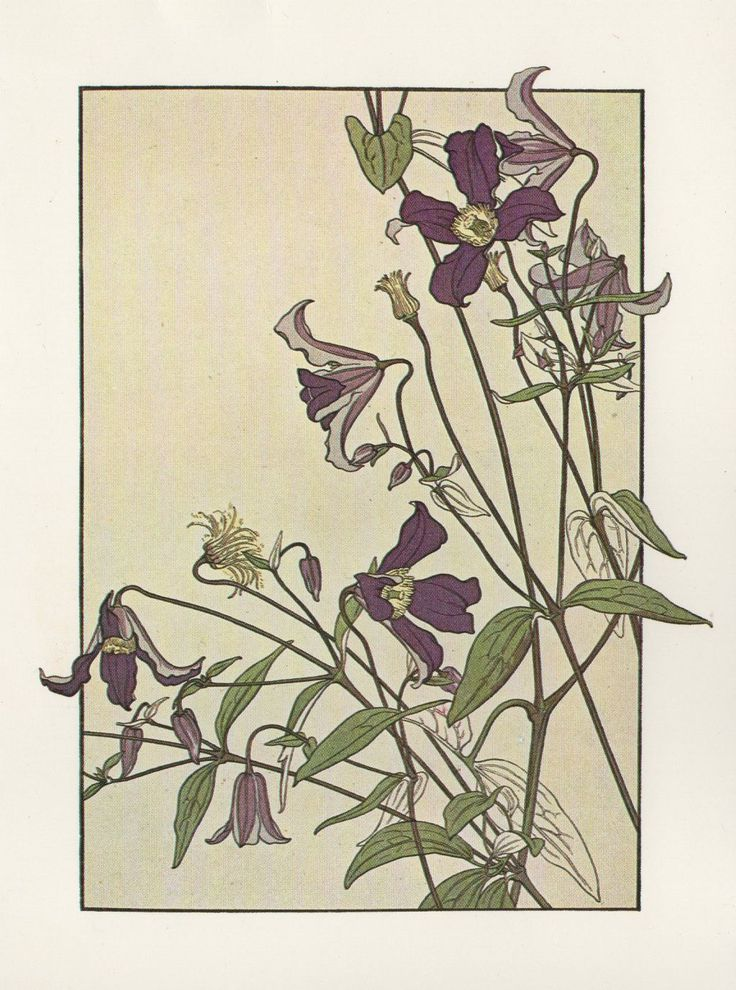 best 25 art nouveau flowers ideas on pinterest art. Black Bedroom Furniture Sets. Home Design Ideas