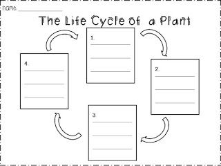 teaching worksheet the life cycle of a plant 4 2 3 ls1a aligns with the ccss. Black Bedroom Furniture Sets. Home Design Ideas