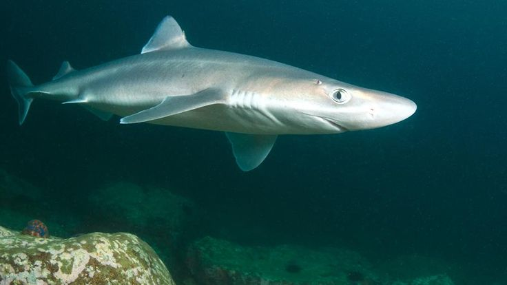 Video: College student dives off pier to catch dogfish shark with bare hands