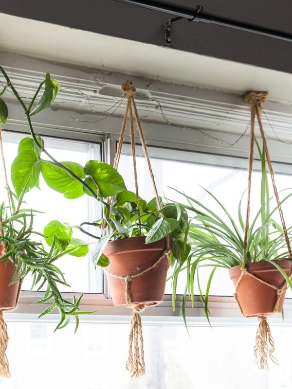 Best Kitchen House Plants Apartment Therapy
