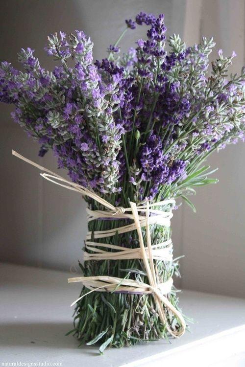 "syflove: "" lavender """