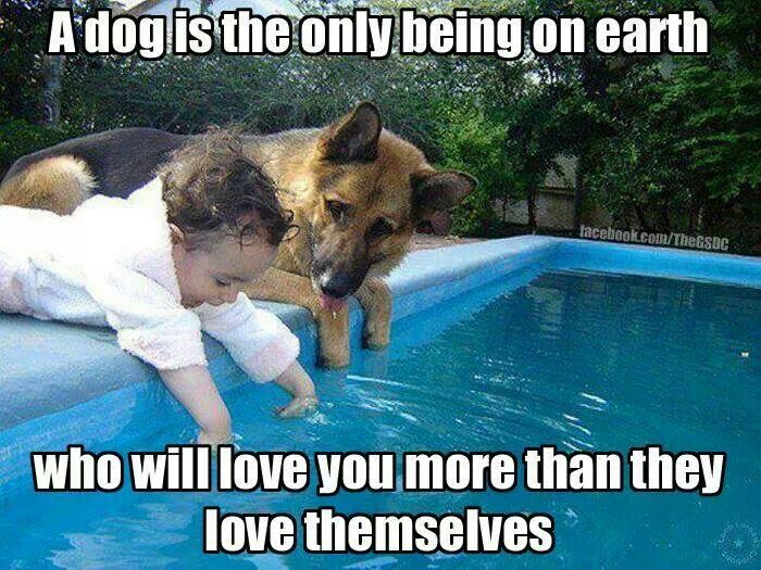 Dog's love has no limits.