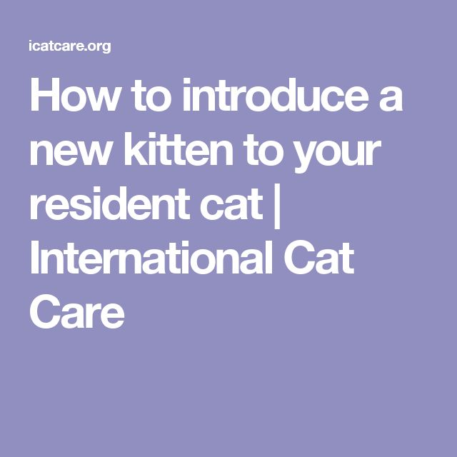 How to introduce a new kitten to your resident cat | International Cat Care