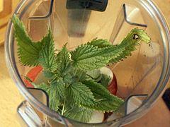 Zelené smoothie na detoxikaci organismu — Recepty — Kouzelné bylinky